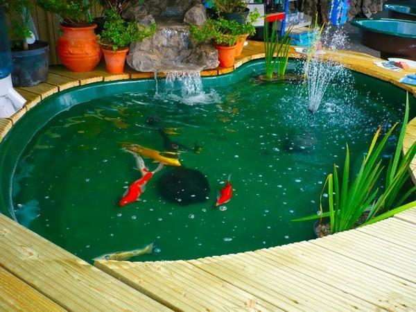 Kolam Ikan Minimalis 5