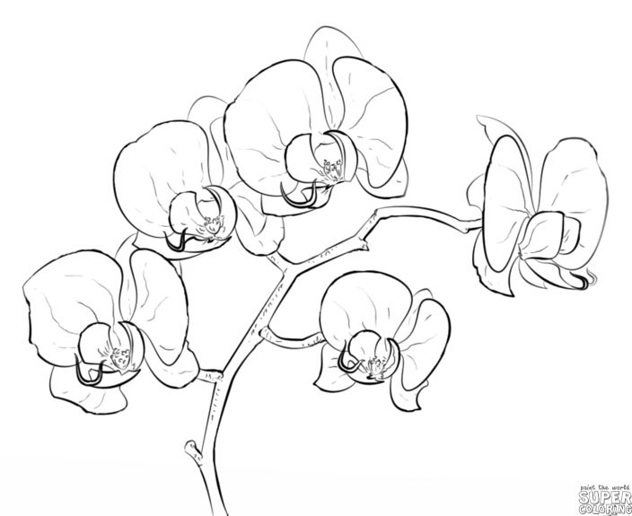 How to draw an orchid | Step by step Drawing tutorials