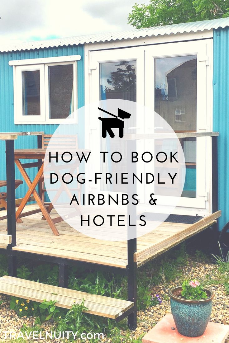 Traveling with your dog? Find out how to book dog-friendly accommodation on Airbnb, Hotels.com and Booking.com