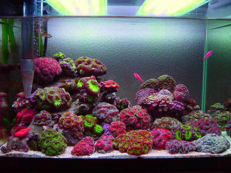 49 best nano reef aquascaping images on pinterest fish for Aquarium recifal nano