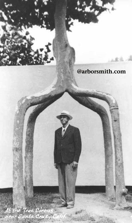 """Axel Erlandson under his """"4 leg giant"""". -->Leading arborist of the early 1900s who """"grew"""" his trees into marvelous shapes. Check them out! <-- LIZ"""