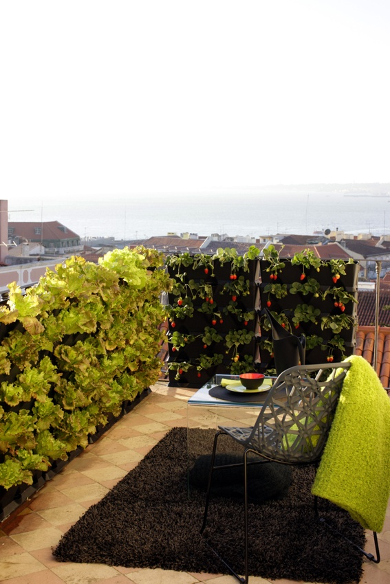 Vertical lettuce and strawberry garden on roof terrace