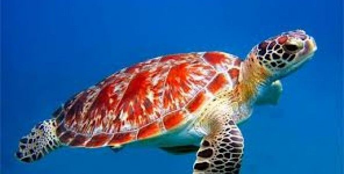 While working on my next book I had a revelation. I am a sea turtle.  That was the revelation. I am a sea turtle.  This is a big deal. For many years I lumbered around, working hard, making little progress, and feeling frustrated. It wasn't a matter of not being properly equipped, I had what