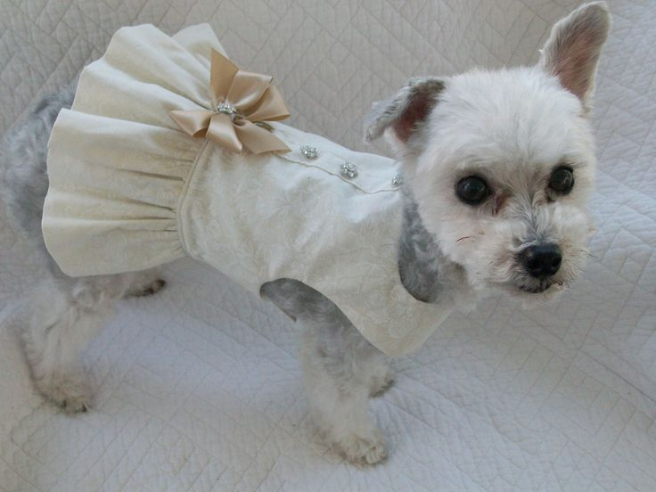 Wedding Dog Dress Harness for Dog or Cat by graciespawprints
