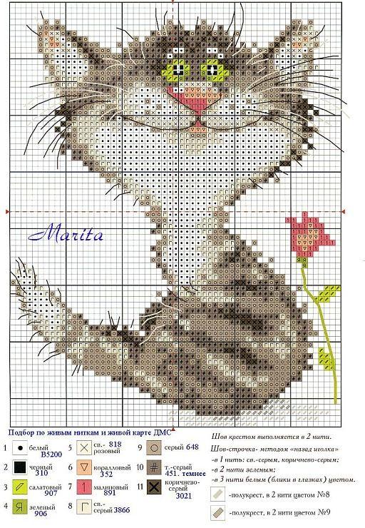 crazy cat: