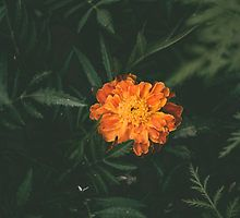 Orange Flower with Leaves by MyInkTees