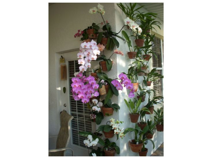 Patio Wall With Phalenopsis Orchids Hung With Hangapot Hangers