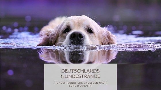 Die Schonsten Hundestrande In Deutschland In 2020 Hundestrand Hund Unterwegs Hunde
