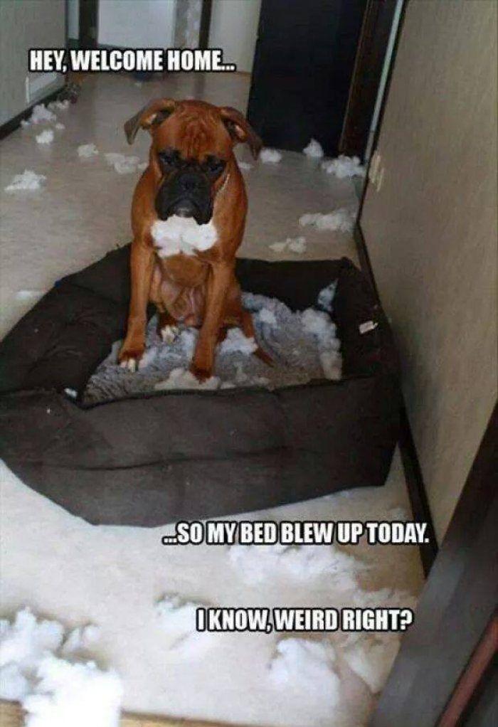Blew Dog Bed