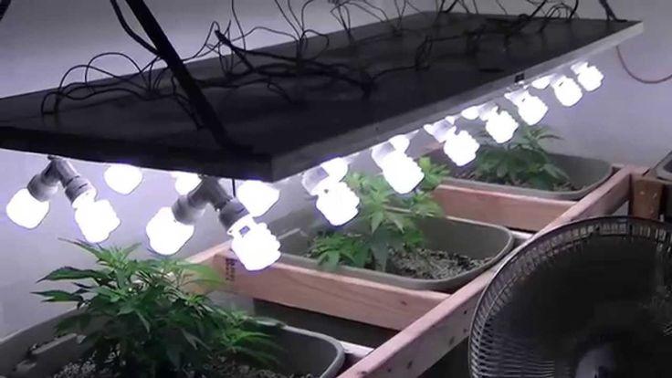 Organic cfl indoor medical marijuana grow part 1 oregon for Indoor gardening rainier oregon