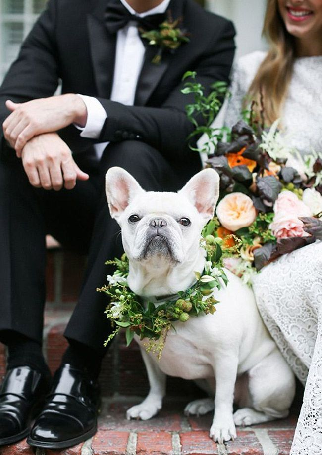 We love the idea of including your pet into your wedding. Looking for an adorable way to include your favorite furry friends? Pick a variety of flowers from your wedding bouquet and your groom's boutonniere to make a flower crown for your best pal.   How to Include your Pup in Your Wedding