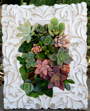 Vertical Living Succulent Garden carved painted wood frame, Table top, wood decor, Mother's Day