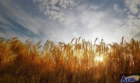 Chicago agricultural commodities rise on downbeat crop…