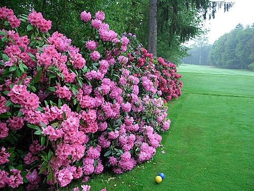 Beautiful Flowers on Tee No 1 - Golf Club Hanau Wilhelmsbad