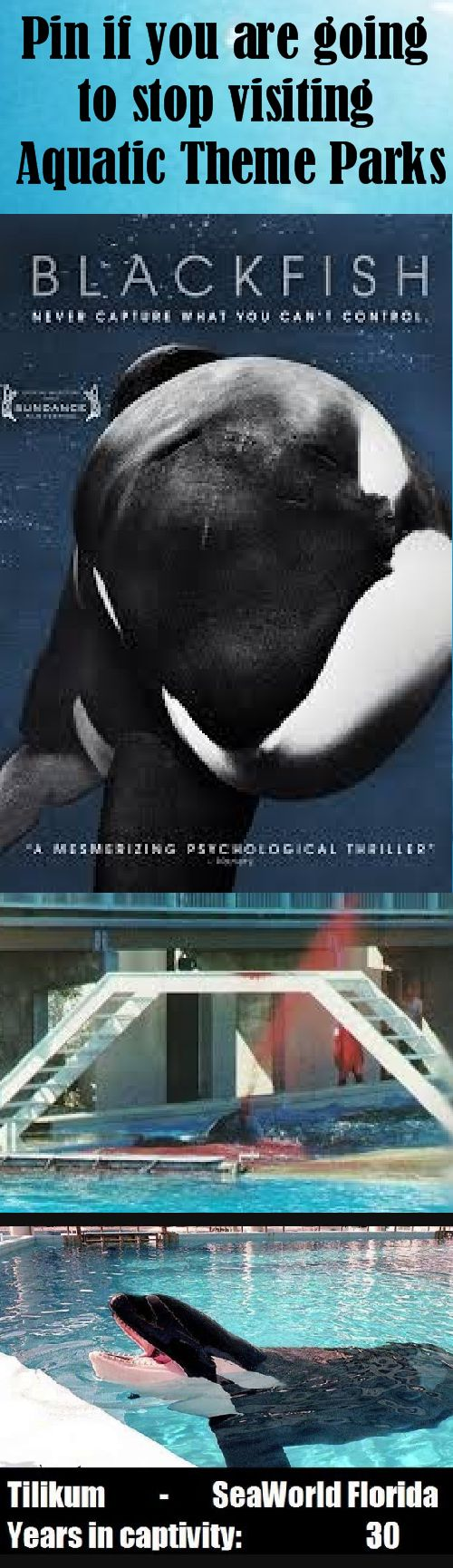 Watch Blackfish. Watch Fall from Freedom. Get educated. Prevent sea parks from profiting from animal cruelty. Do not go there. They're highest concern is to have your money, not to look after the animals. Share this pin and spread the word.
