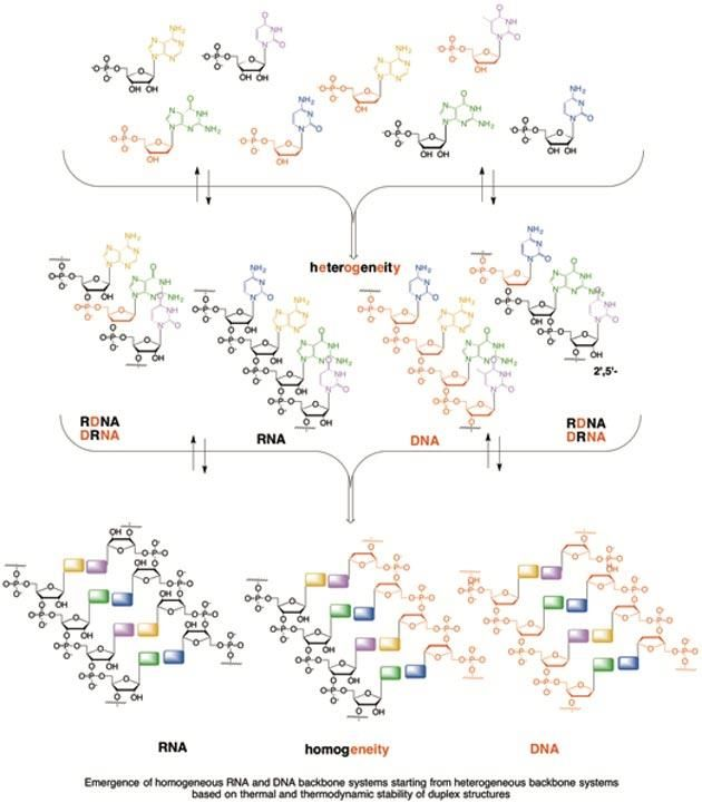 the deoxyribonucleic acid as a very useful in the world of forensic science Deoxyribonucleic acid (dna) is also known as the molecule of life and contains the genetic instructions in the development of all living organisms it is found in every cell in the human body, with the exception of red blood cells.