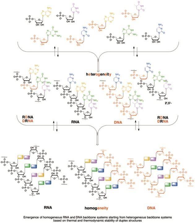 Principles Of The Rna World Theory Biology Essay