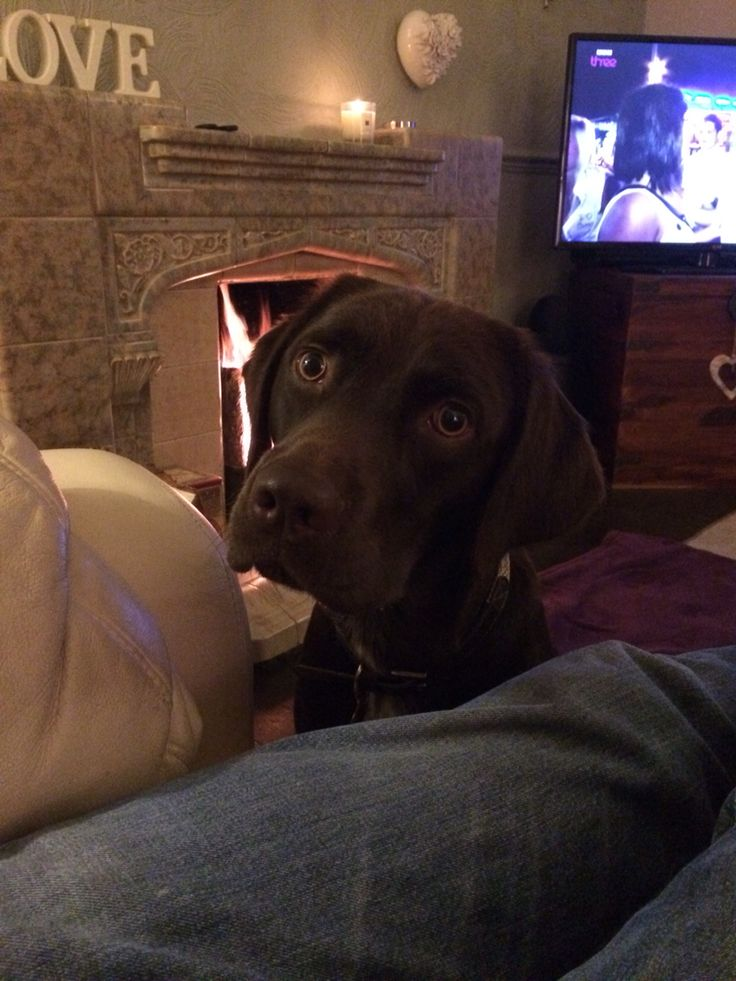 Just one biscuit?? Pleeeease....
