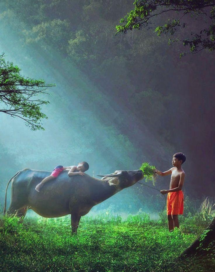 Na Indonésia, imagem capturada por Ipoenk Graphic mostra duas crianças se divertindo ao alimentar uma vaca