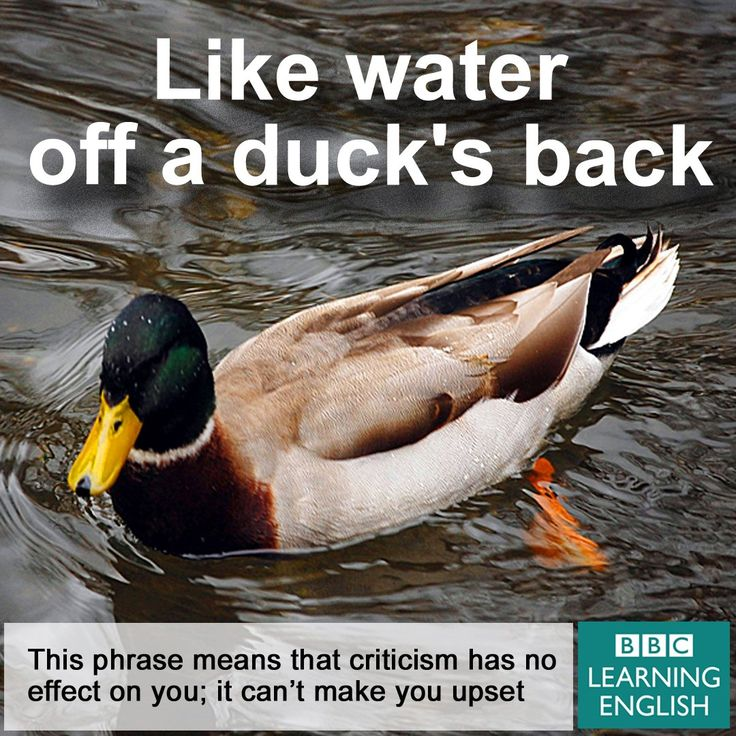 Expression: Like water off a duck's back