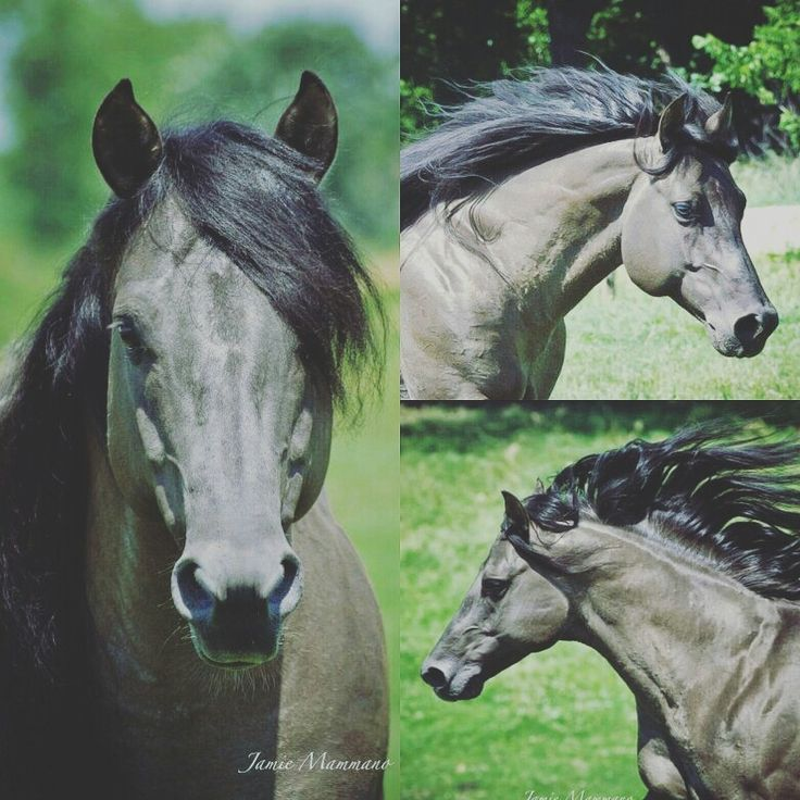 Someone please buy me a horse like this one. Thats the most beautiful horse Ive ever seen. Photo: Jamie Mammano
