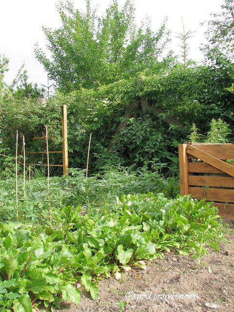 Ogród przydomowy, warzywnik, kompostownik