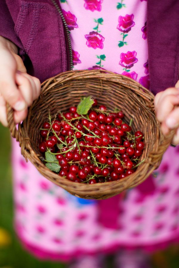 Red Currants- such a great garnish for cakes or around the platter of a main dish.