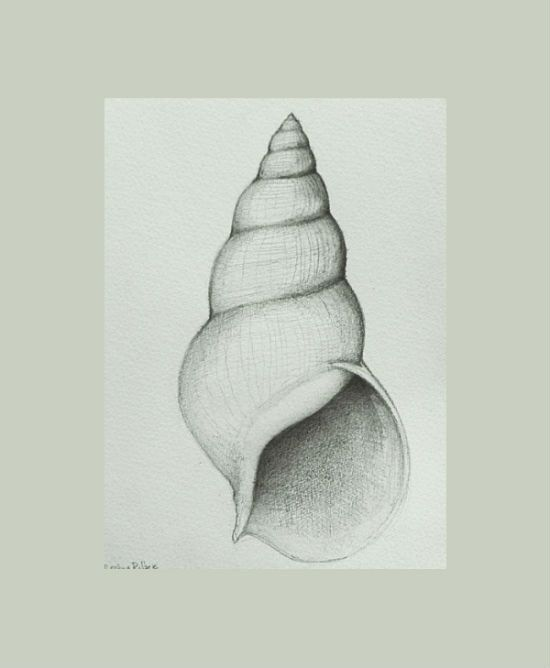 Shell - number 2 - Original pencil drawing on acid free paper Canson 200 gr by Cristina Ripper. €40.00, via Etsy.