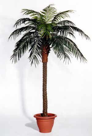 AANBIEDING 6 palmbomen van €90,- voor €75,-  De kunst palmboom is 220 cm hoog en van een mooie kwaliteit
