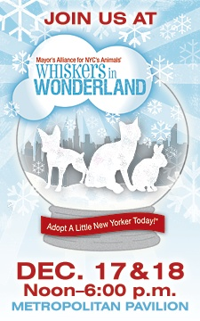 The Whiskers in Wonderland holiday pet adoption event, hosted at the Metropolitan Pavilion in December by the Mayor's Alliance for NYC's Animals, features hundreds of cats, kittens, and rabbits just waiting to be welcomed into a new home. In return, these furry new friends will give the gift of unconditional love!