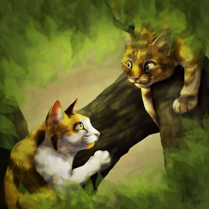 58 Best Images About Favourite Warrior Cats =3 On Pinterest