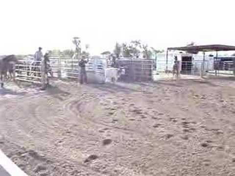 George Strait Roping Head Heel Rope Horse For Sale Cowhorse