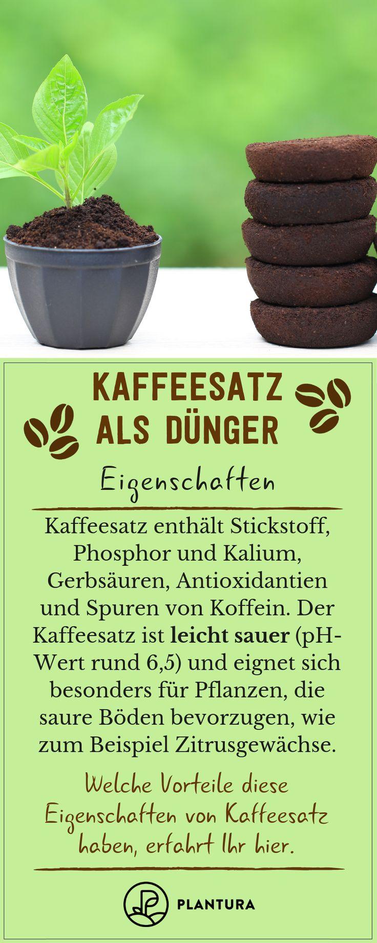 Kaffeesatz als Dünger: Verwendung & Vorteile des Hausmittels