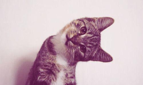 i love cat
