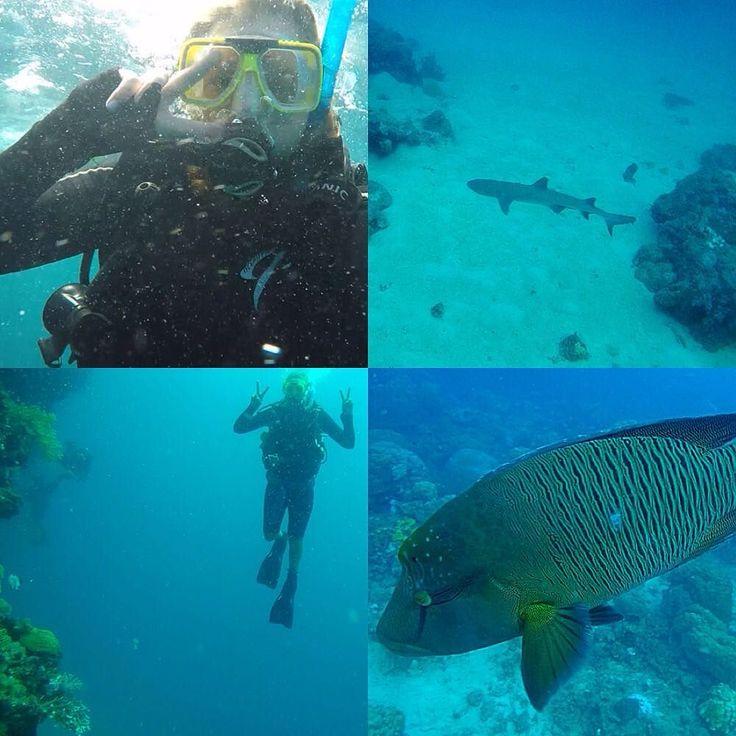 Hade 3 fantastiska dagar på det stora barriärrevet där vi tog ett open water diver certifikat och ett open water advanced certifikat. Vi såg både stora och små fiskar bl.a. Nemo och hans vänner papegojfiskar Napoleonfisken Wally som syns på bilden och en och annan Whitetip reef shark!  #greatbarrierreef #cairns #diving by sarah_maggie_aus http://ift.tt/1UokkV2
