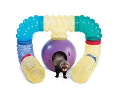 Ferret Supplies List - What to Buy? - http://www.mypetarticles.com/ferret-supplies-list-what-to-buy/#more-2068