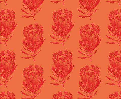 Protea </br> Bright Magenta on Orange