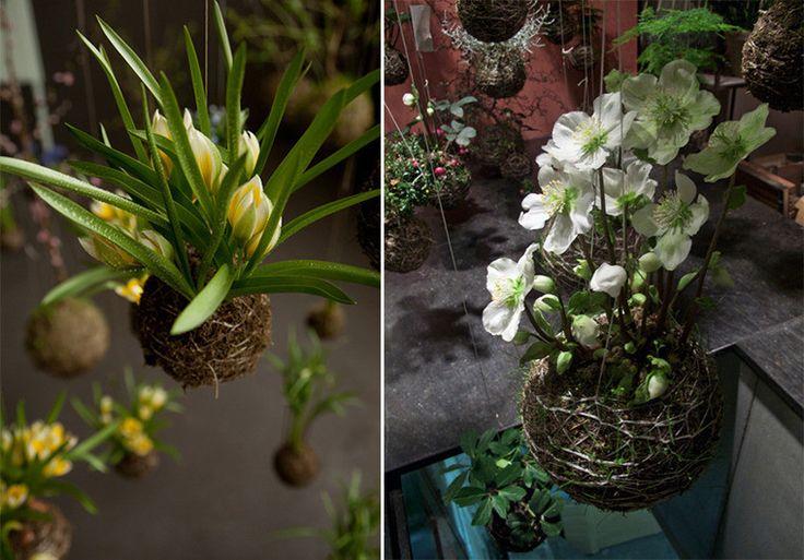 Красивые зеленые цветы Федора Ван дер Валка