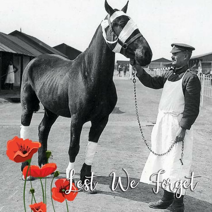 In honor of our Veterans, Equi-Health Canada will be donating a portion of all November equine first aid courses to the incredible people at Soldier On. Thank you, Veterans, for all you have done for Canadians, and thank you Soldier On / Sans Limites for tirelessly helping our Veterans.  #equihealthcanada #horse #firstaid #horses #efa #veteran #veterans #remember #remembrance #remembranceday #canadians #canadian #canada #soldier #lestweforget