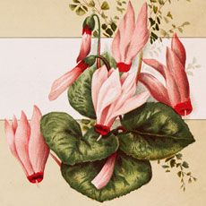Nostalgic Pink Flower Spray Card Image!