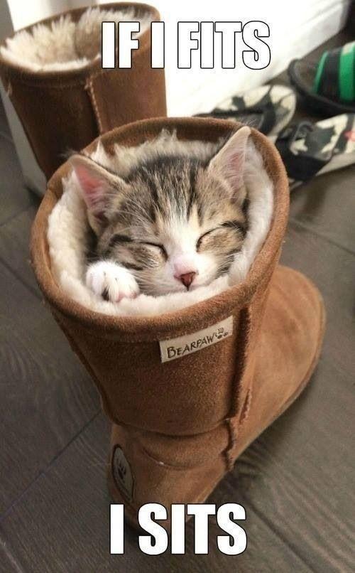 So cute!!!:)   That poor cat!! :(