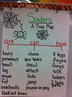 Spiders can, have, are activity