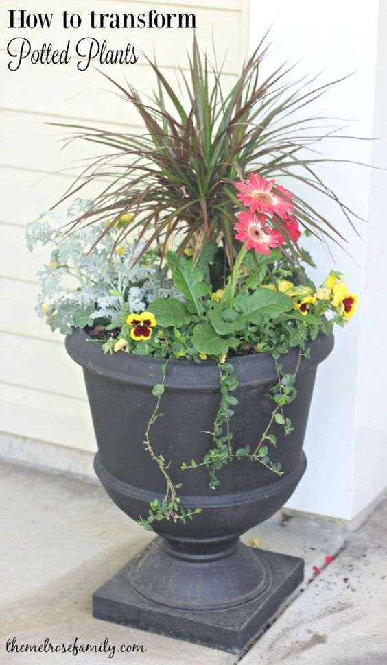 If you've struggled with how to create perfect potted plants then this how-to is for you, even if you don't have a green thumb.