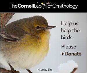 Awesome all about bird website...bird sounds, web cams, habitats..