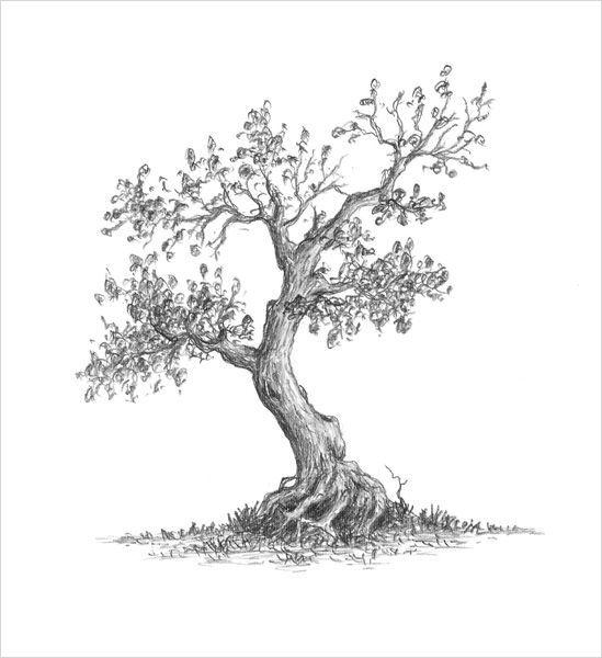 Karakalem Ağaç Çizimleri Kolay - En Yeniler En İyiler
