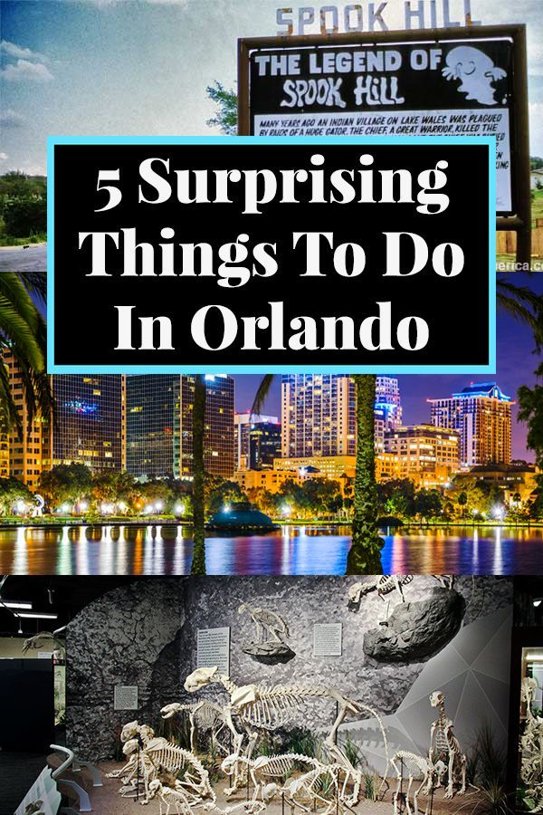Not Disney Or Universal Studios Forget The Theme Parks And Check Out These 5 Surprising Things Orlando Activities Things To Do Orlando Attractions In Orlando