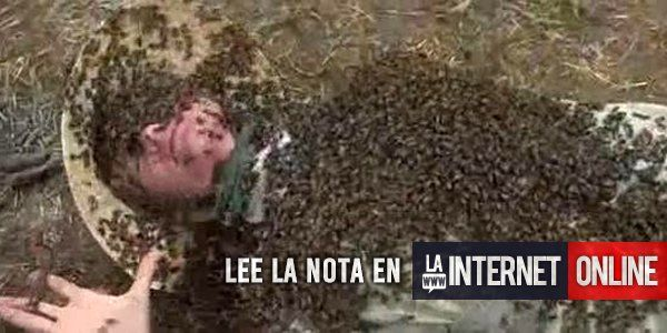Dos personas murieron tras ser atacadas por abejas asesinas