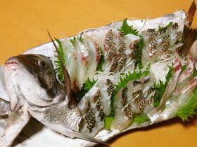 チヌ(クロダイ)の刺身、活造り