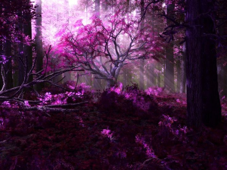 : In My Dreams, Purple Trees, Purple Forests, Magic Forests, Forests Wallpapers, Fantasy Forests, Purple Passion, Beautiful Flowers, Purple Photography