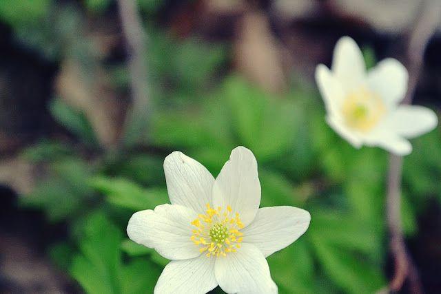 Spring in Jul's eyes...